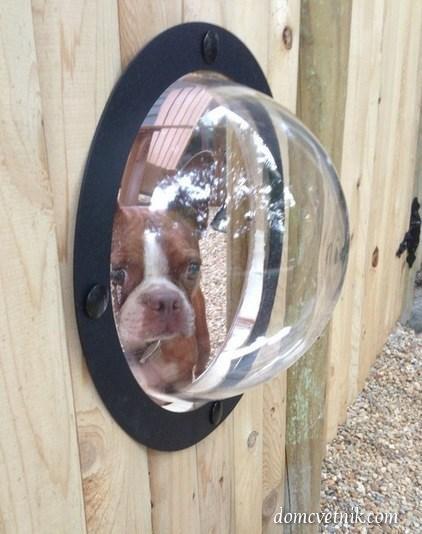Оригинальные приспособления для собак. 4 идеи