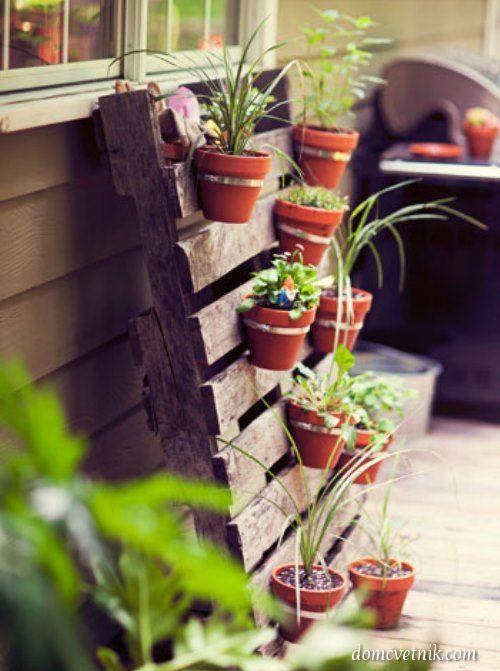 Вертикальное озеленение. 9 идей