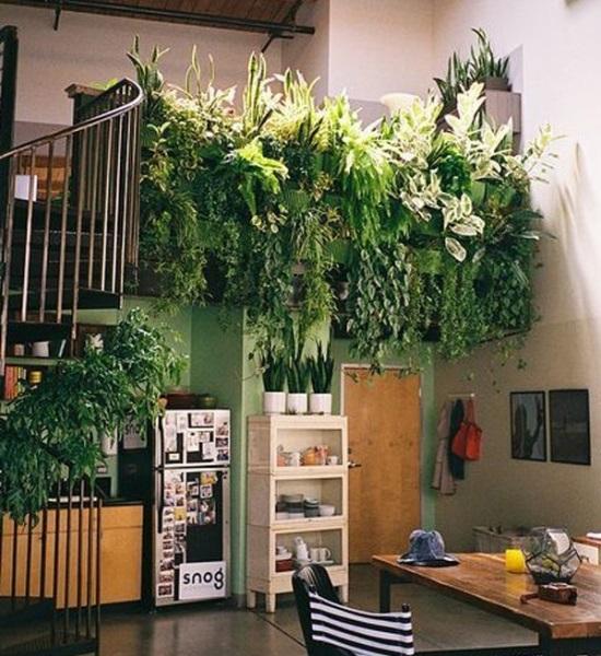 Зеленая стена из растений