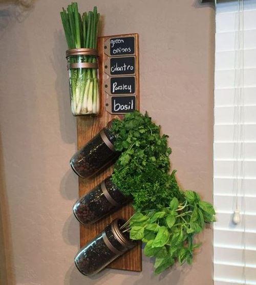Прием выращивания зелени в домашних условиях