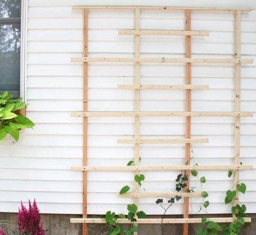 Шпалера для вертикального озеленения. 20 красивых идей