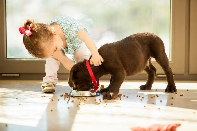 Как научить ребенка ухаживать за питомцем