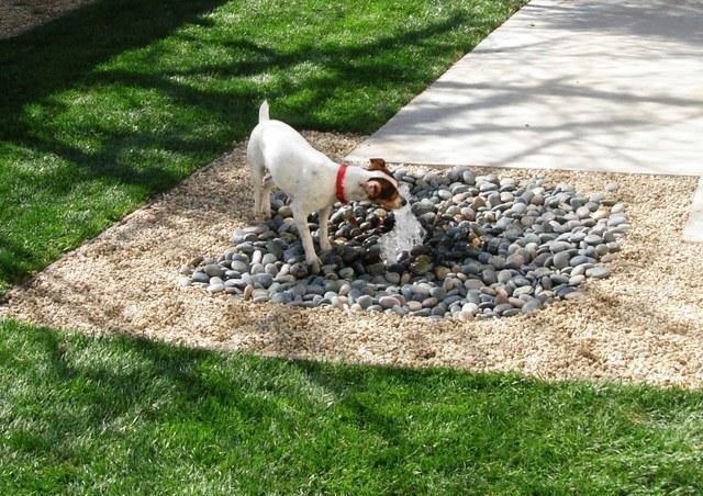мебель для домашних животных, приспособления для собак